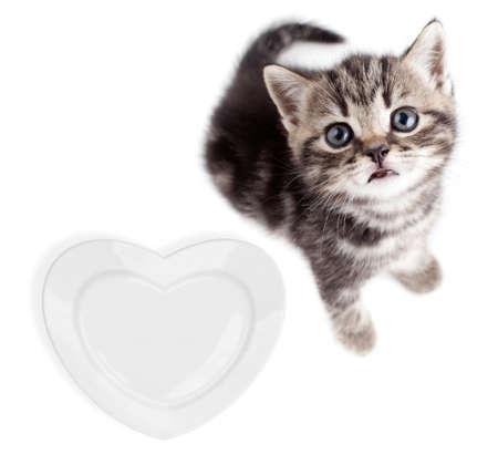 british pussy: Scottish or british gray kitten top view isolated