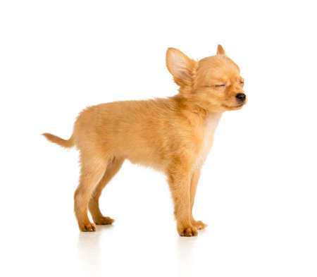 puppy with closed eyes Stock Photo - 17965994