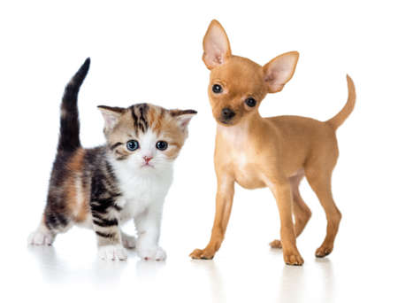 puppy and kitten isolated on white photo