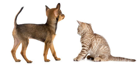 puppy and kitten rear or back view isolated on white photo