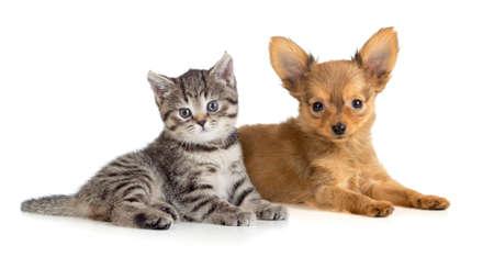 puppy love: Perrito y gatito acostado juntos Gato y perro