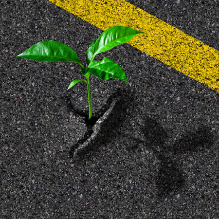 rebirth: Sprout from asphalt hole Stock Photo