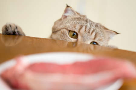 unattended: Cat trying to steal food from kitchen table Stock Photo