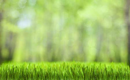 春の緑の抽象的な森の自然な背景
