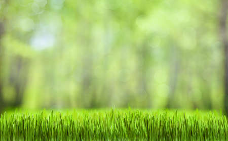 봄 녹색 추상적 인 숲 자연 배경