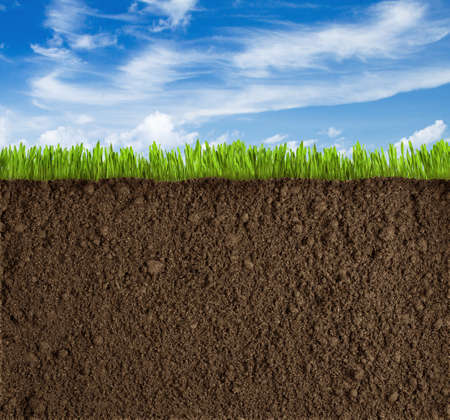 grass plot: Soil, grass and sky background Stock Photo