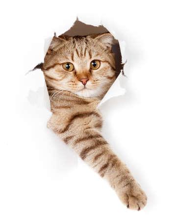 veterinaria: gato en el agujero blanco, papel pintado