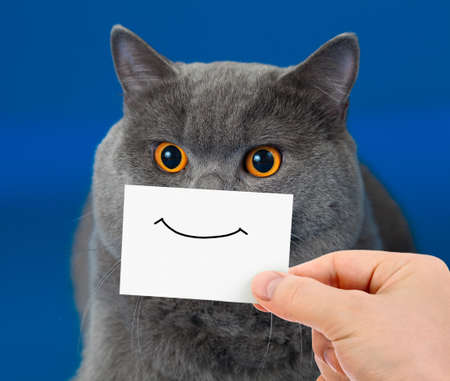 funny cat portrait with smile on card