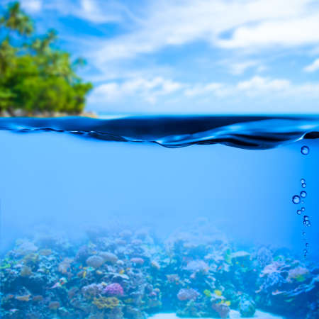 underwater diving: underwater tropical sea with water surface background
