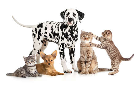 pets animals group collage for veterinary or petshop isolated photo