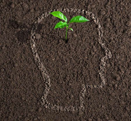 undertaking: young growth of idea inside of human head contour on soil concept Stock Photo