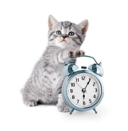 schattig katje met wekker