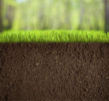 숲에서 잔디에서 흙