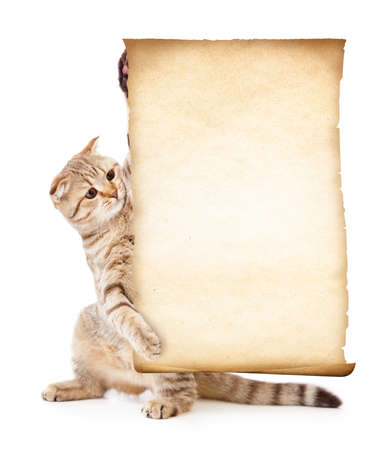 cat with old blank parchment or paper photo