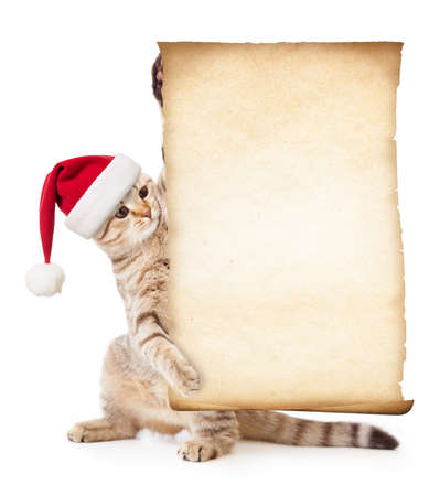caption: Cat in Santas hat with old paper roll or parchment Stock Photo