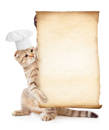 funny cat in chef hat holding parchment for menu photo