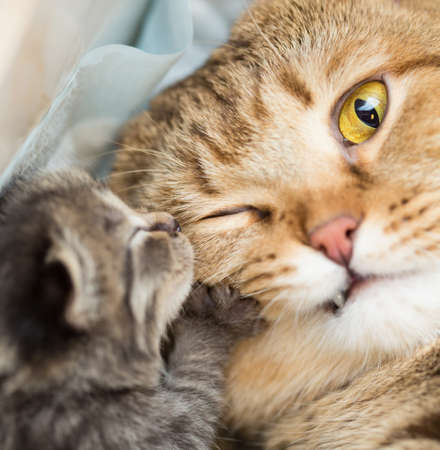 little kitten with shocked mother cat photo