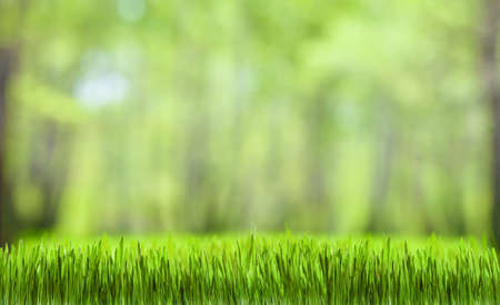 green grass and forest nature background for desktop wallpaper photo
