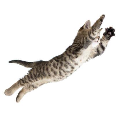 飛行または白で隔離される子猫猫ジャンプ