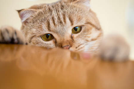 slink: Cat trying to steal something from kitchen table