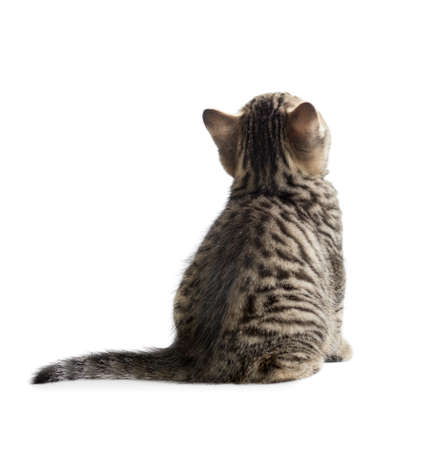 kitten rear or back view isolated on white Stock Photo - 24930672