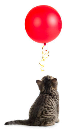 turn back: kitten rear or back view looking up on red balloon