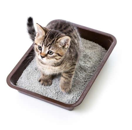 chaton ou un chat dans la boîte de plateau de toilette avec de la litière absorbante isolé