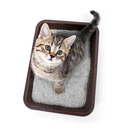 chaton ou un chat dans la boîte de plateau de toilette avec de la litière absorbante isolés vue de dessus