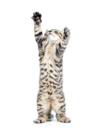 standing kitten cat photo