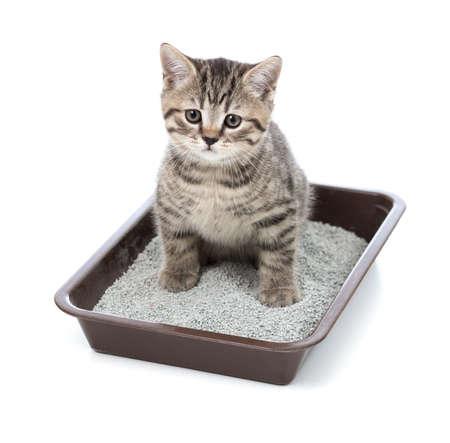 chaton ou petit chat dans la boîte de plateau de toilette avec de la litière Banque d'images
