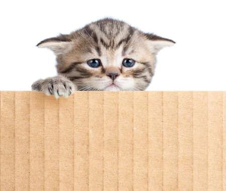 cardboard cutout: little kitten behind cardboard fence