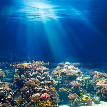 Mer ou l'océan récif corail sous-marin en apnée ou en plongée fond