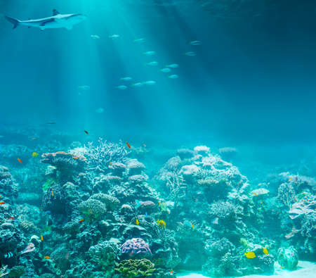 Sea or ocean underwater coral reef with shark photo