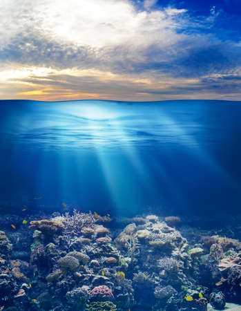 beneath the surface: sea or ocean underwater life with sunset sky Stock Photo