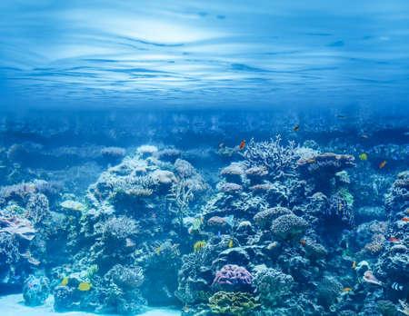 Morze lub ocean podwodne z raf koralowych i ryby tropikalne Zdjęcie Seryjne