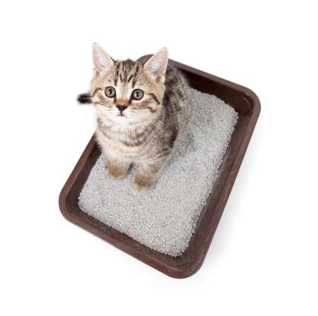 charolas: gatito gato en la caja de la bandeja de aseo con vista superior de arena aislado en blanco Foto de archivo