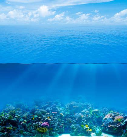 fondali marini: Subacqueo in profondità con la superficie dell'acqua e del cielo Archivio Fotografico