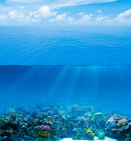 underwater world: Underwater deep with water surface and sky