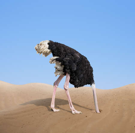 hide: scared ostrich burying its head in sand Stock Photo