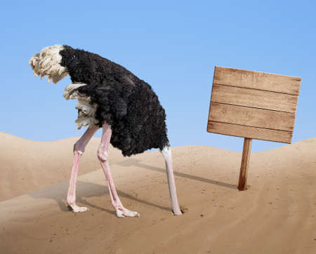 scared ostrich burying head in sand near standing blank wooden signboard