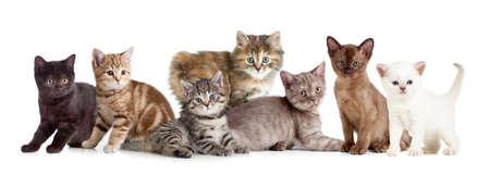 Een groep van verschillende kitten