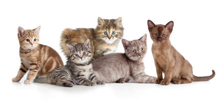A group of different kitten 免版税图像