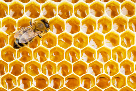 honeycomb: working bee on honeycomb cells close up