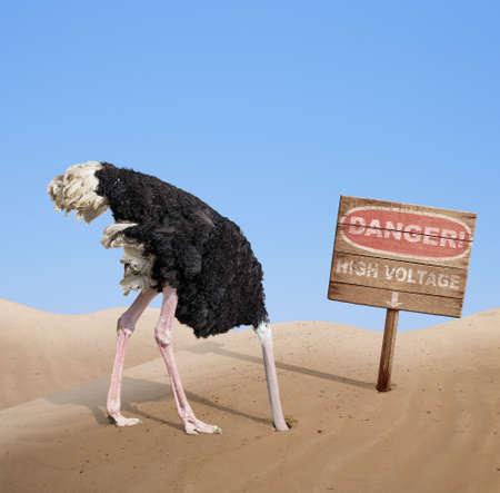 Peur tête d'autruche d'enfouissement dans le sable sous le signe de danger Banque d'images - 33921670