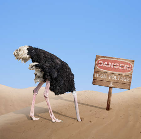 hidden danger: scared ostrich burying head in sand under danger sign