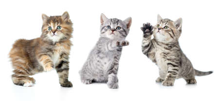 Set of various kittens with paw up isolated photo