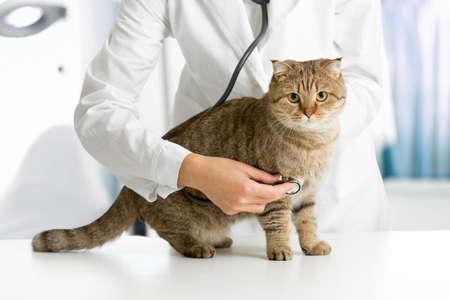 Cat in veterinarian clinic