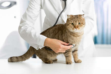 cats: Cat in veterinarian clinic