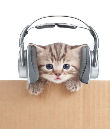 Funny kitten cat in headphones in cardboard box