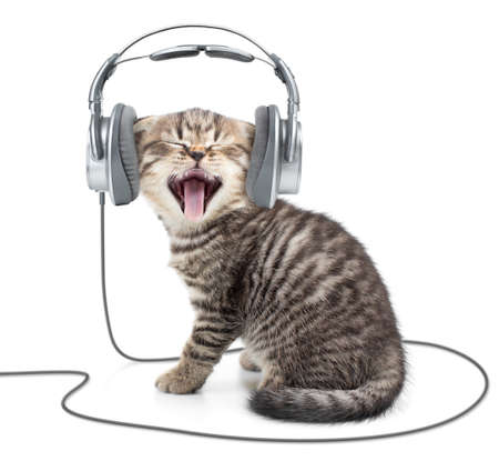 earbud: Singing kitten cat in wired headphones listening to music